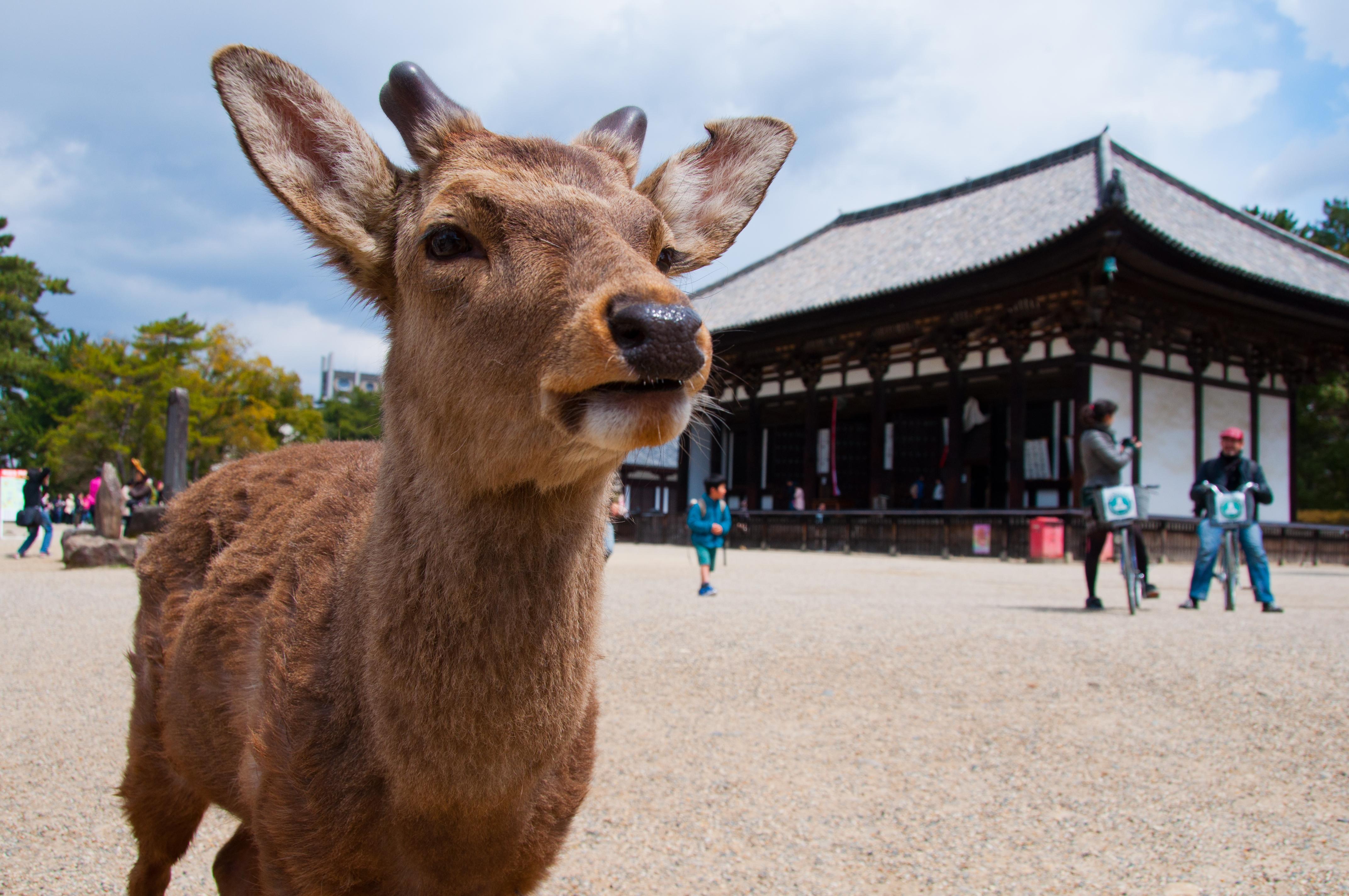 奈良2015夏季最新情報 | 樂吃購‧奈良